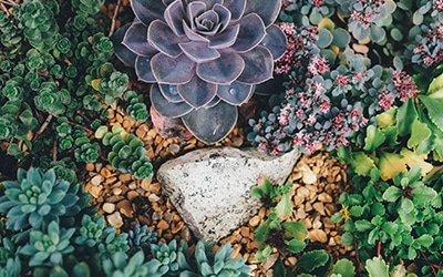 Xeriscaping by Colorado Living Spaces